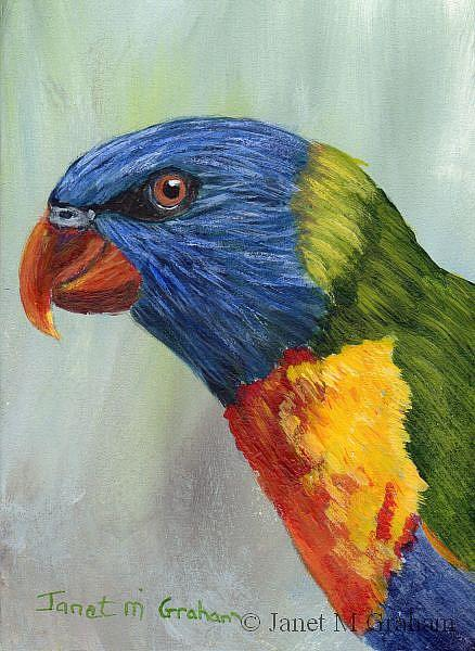 Art: Rainbow Lorikeet ACEO by Artist Janet M Graham