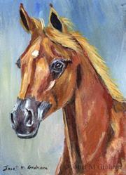 Art: Arabian Horse ACEO by Artist Janet M Graham