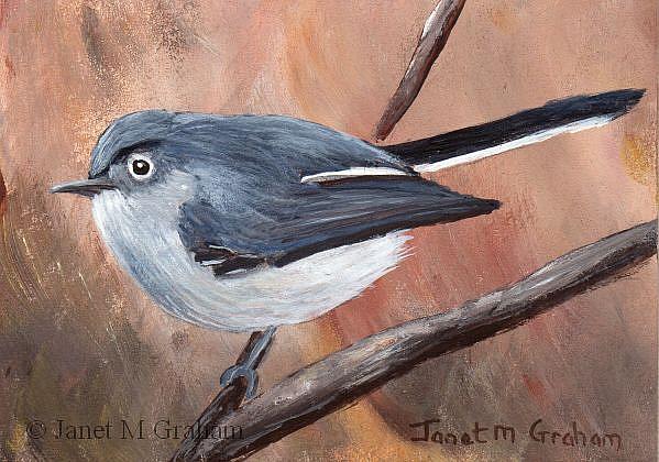 Art: Blue Grey Gnatcatcher ACEO by Artist Janet M Graham