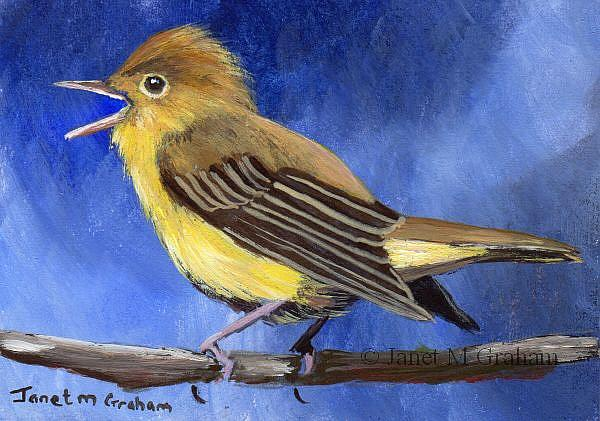 Art: Icterine Warbler ACEO by Artist Janet M Graham