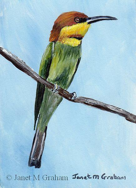 Art: Chestnut Headed Bee Eater ACEO by Artist Janet M Graham