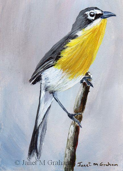 Art: Yellow Breasted Chat ACEO by Artist Janet M Graham