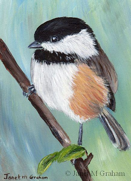 Art: Black Capped Chickadee ACEO by Artist Janet M Graham