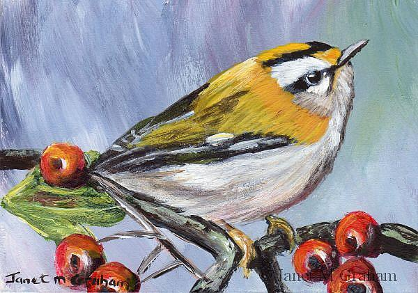 Art: Common Firecrest ACEO by Artist Janet M Graham