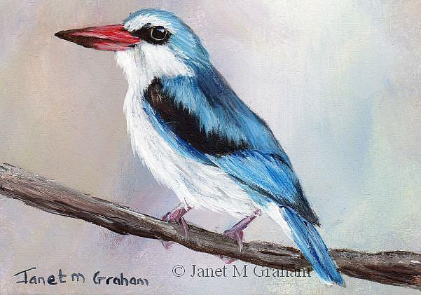 Art: Woodland Kingfisher ACEO by Artist Janet M Graham