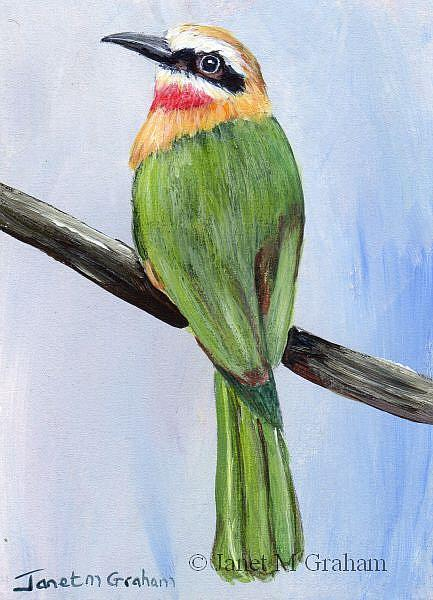 Art: White Fronted Bee Eater ACEO by Artist Janet M Graham