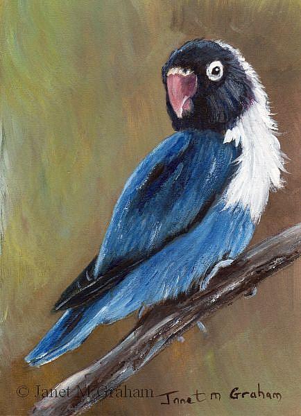Art: Blue Masked Lovebird ACEO by Artist Janet M Graham