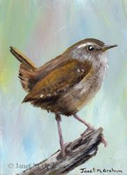 Art: Wren ACEO by Artist Janet M Graham