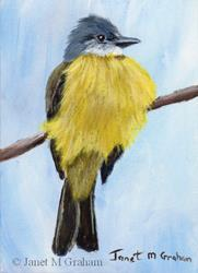 Art: Couch's Kingbird ACEO by Artist Janet M Graham