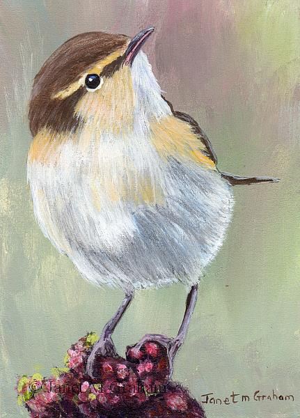 Art: Common Chiffchaff ACEO by Artist Janet M Graham