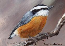 Art: Red Breasted Nuthatch ACEO by Artist Janet M Graham