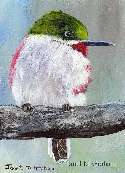 Art: Narrow Billed Tody ACEO by Artist Janet M Graham