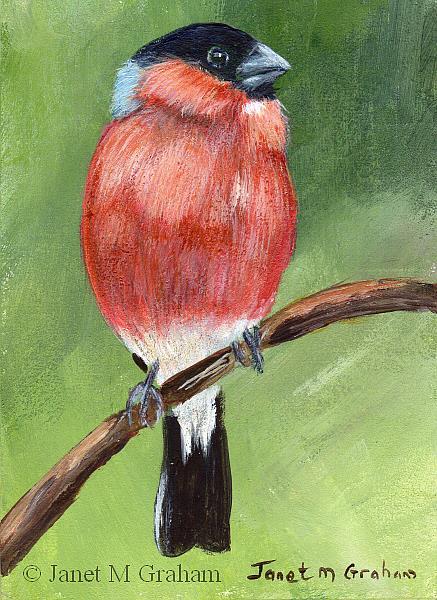 Art: Bullfinch ACEO by Artist Janet M Graham