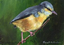 Art: Cape Crombec ACEO by Artist Janet M Graham