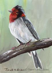 Art: Red Faced Warbler ACEO by Artist Janet M Graham