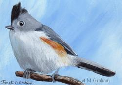 Art: Black Crested Titmouse ACEO by Artist Janet M Graham