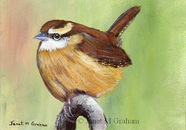 Art: Carolina Wren ACEO by Artist Janet M Graham
