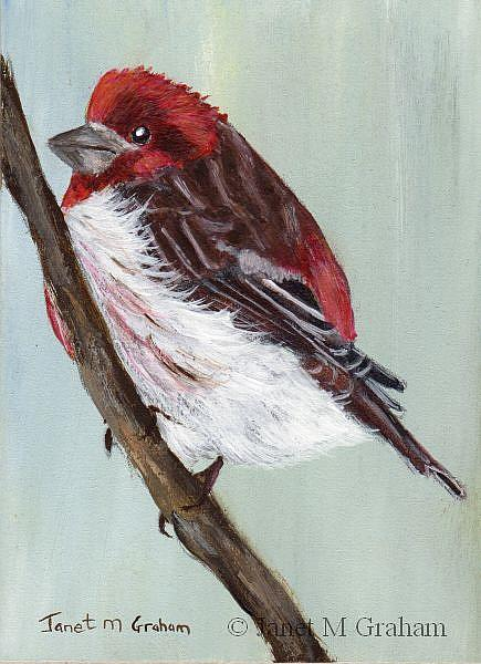 Art: Purple Finch ACEO by Artist Janet M Graham