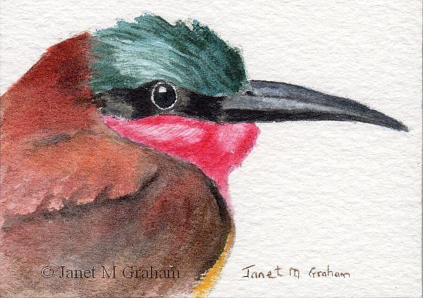 Art: Carmine Bee Eater ACEO by Artist Janet M Graham
