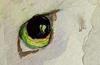 Detail Image for art Irish Cat