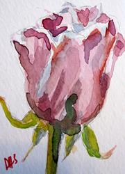 Art: Pink Rose Aceo-SOLD by Artist Delilah Smith