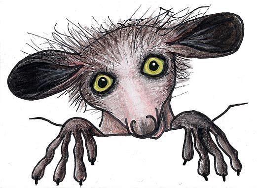 Baby aye aye lemur - photo#28