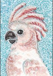 Art: Moluccan Cockatoo by Artist Melinda Dalke