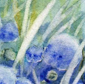 Detail Image for art Blue thimble flowers