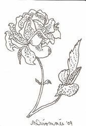 Art: Blooming Rose by Artist Nancy Denommee
