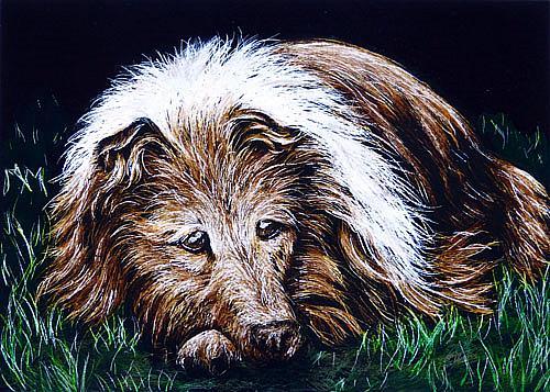 Art: Collie  (SOLD) by Artist Monique Morin Matson