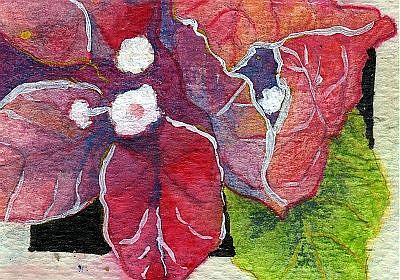 Art: Bougainvillea by Artist Judith A Brody