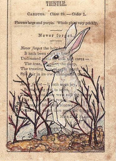 Art: Thistle Rabbit by Artist Emily J White
