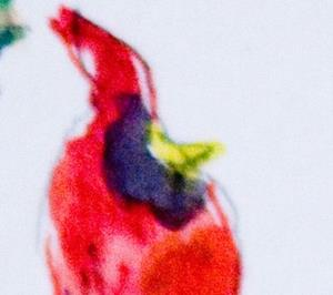 Detail Image for art Cardinals and Holly Aceo
