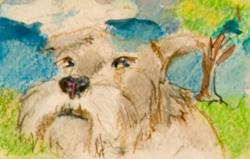 Art: Schnauzer Aceo by Artist Delilah Smith