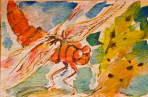 Detail Image for art Dragonfly Aceo