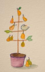 Art: A Partridge in a Pear Tree Aceo by Artist Delilah Smith