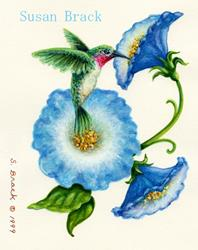 Art: HUMMING BIRD MORNING GLORY by Artist Susan Brack