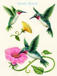 Art: HUMMING BIRD YELLOW MORNING GLORY by Artist Susan Brack