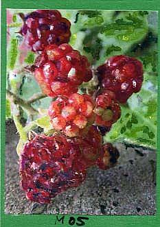 Art: RED BERRIES #5 by Artist Gabriele Maurus