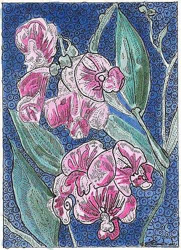 Art: SPURRED BUTTERFLY PEA by Artist Theodora Demetriades