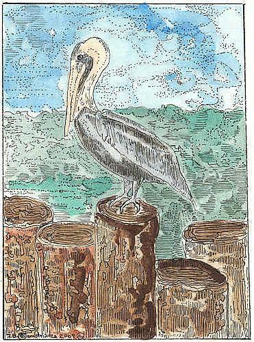 Art: FLORIDA PELICAN by Artist Theodora Demetriades