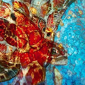 Detail Image for art Sea Turtle abstract remake