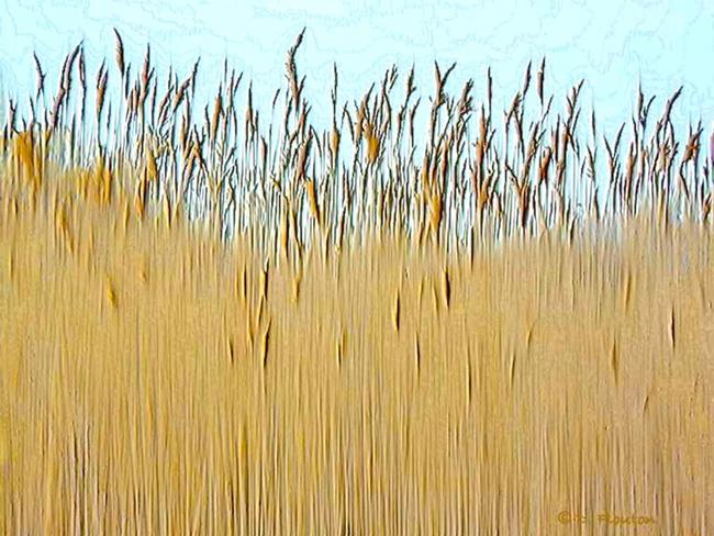 Art: Cat Tail Grass by Artist Deanne Flouton