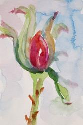 Art: Rose Bud Aceo by Artist Delilah Smith