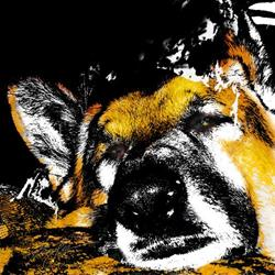 Art: It's a Dog's Life by Artist Alma Lee