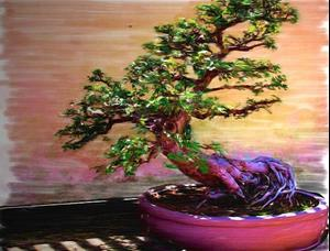 Detail Image for art Bonsai Magic Money Tree