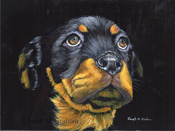 Art: Rottweiler Puppy ( Rocky) by Artist Janet M Graham