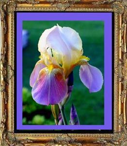 Detail Image for art Mum's Iris