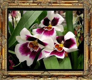 Detail Image for art Orchids