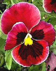 Art: Pink Pansy by Artist Laurie Justus Pace